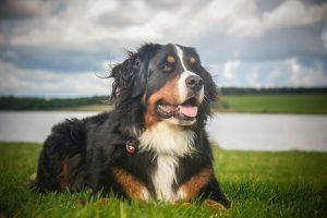 VOLJENI LJUBIMAC: 8 životnih lekcija koje možemo NAUČITI od svog psa!