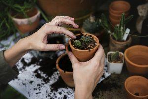 Želite da ojačate imunitet? Odmah nabavite biljku!