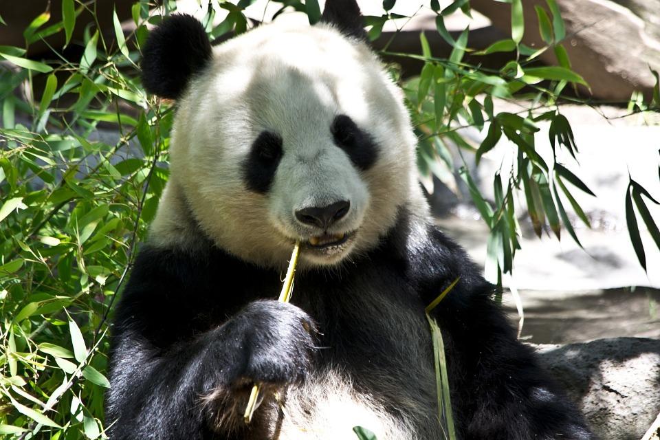 Svetski dan životinja: U danu nestane od 50 do 150 vrsta!