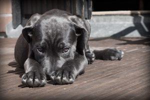 UPOZNAJTE BOLJE SVOG NAJBOLJEG PRIJATELJA: Brzi vodič za razumevanje psećeg jezika