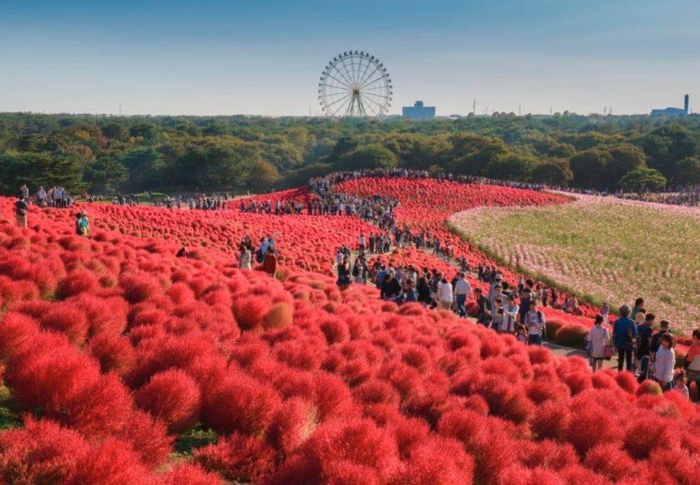 Hitači park - Cvetni raj u Japanu!