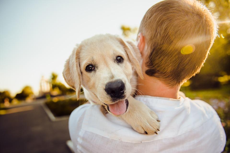 Ovako ćete saznati da li je prevruće za šetnju vašeg ljubimca - potrebno vam je SAMO pet sekundi