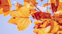 Proleće u decembru, prava zima još ni na vidiku