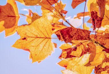 Vremenska prognoza za 27. oktobar