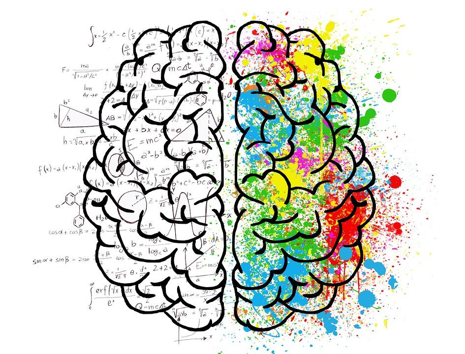 Zanimljive razlike između ženskog i muškog mozga!