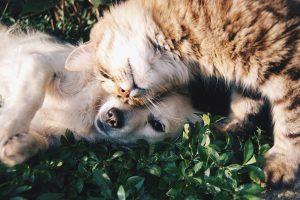 Mače koje ne dozvoljava psu da spava ulepšaće vam dan! VIDEO
