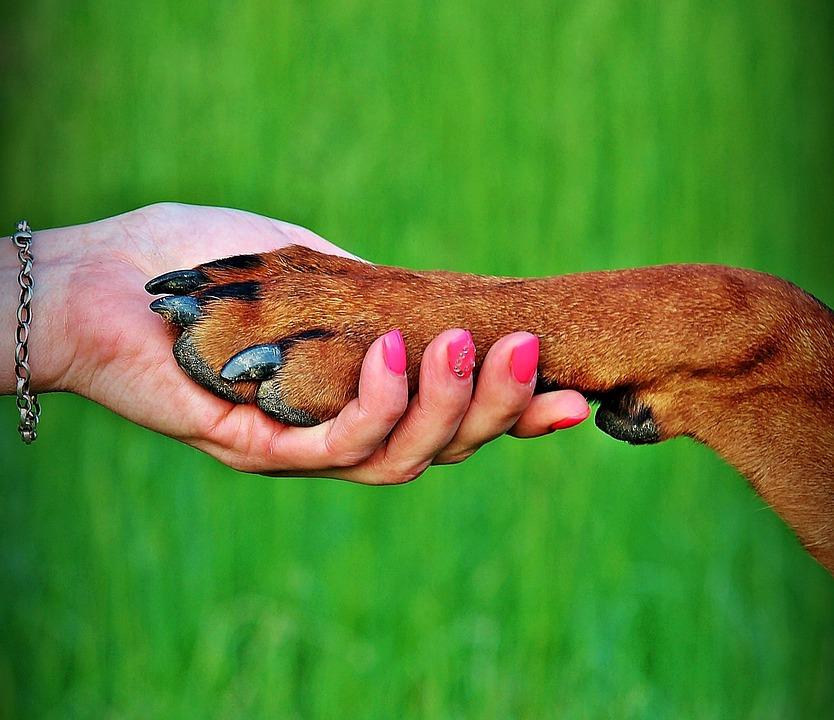 NAUČNICI TVRDE: Mozak ljudi i kućnih ljubimaca je sličniji nego što mislite