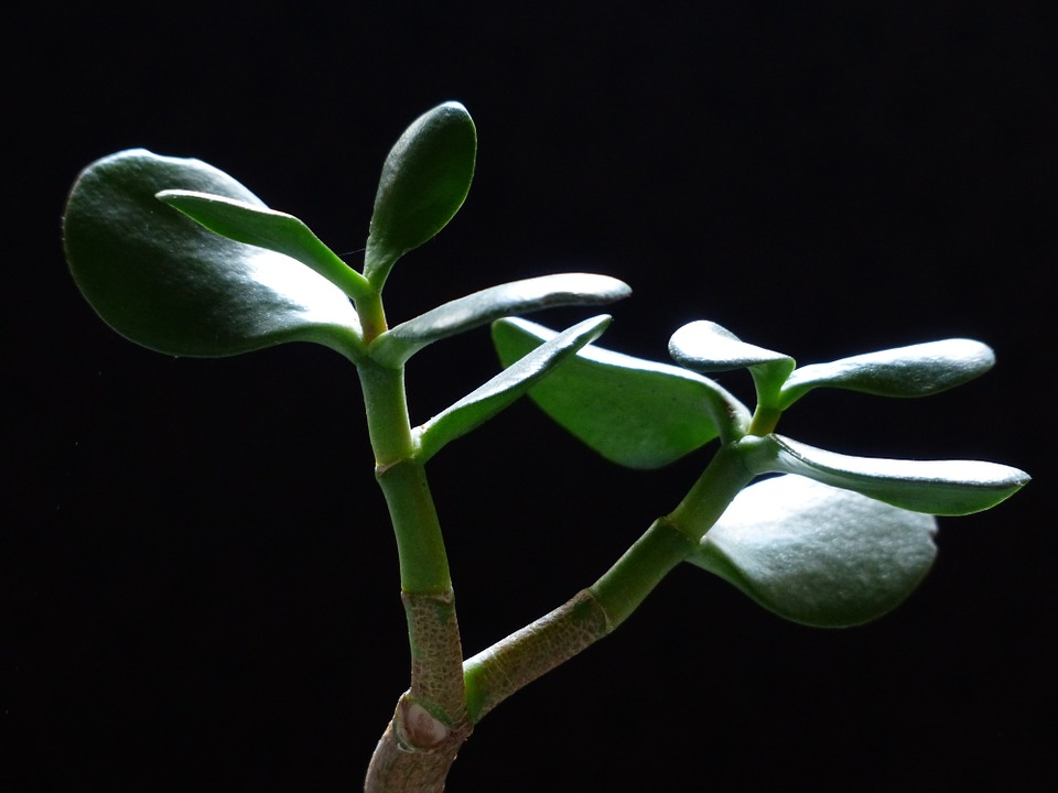Stručnjaci presudili: Ovo su tri najbolje biljke za svaki dom