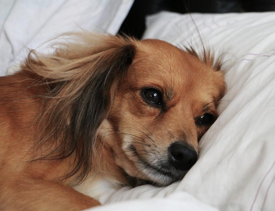 7 razloga zašto spavanje sa psom doprinosi boljem snu!