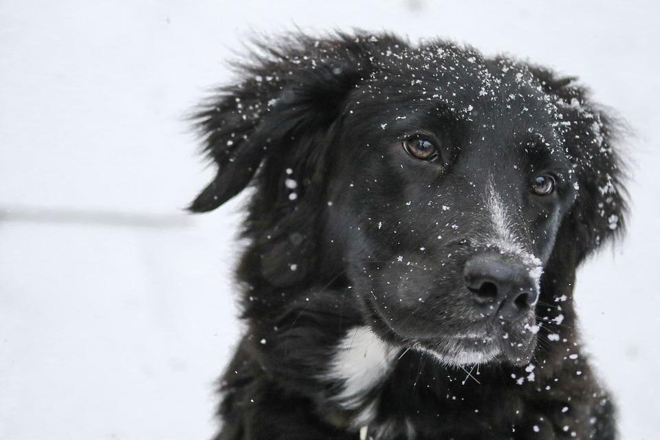 I njima je hladno! Pomozite napuštenim životinjama! (VIDEO)