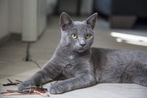 mačka, vežbajte s mačkom, press serbia