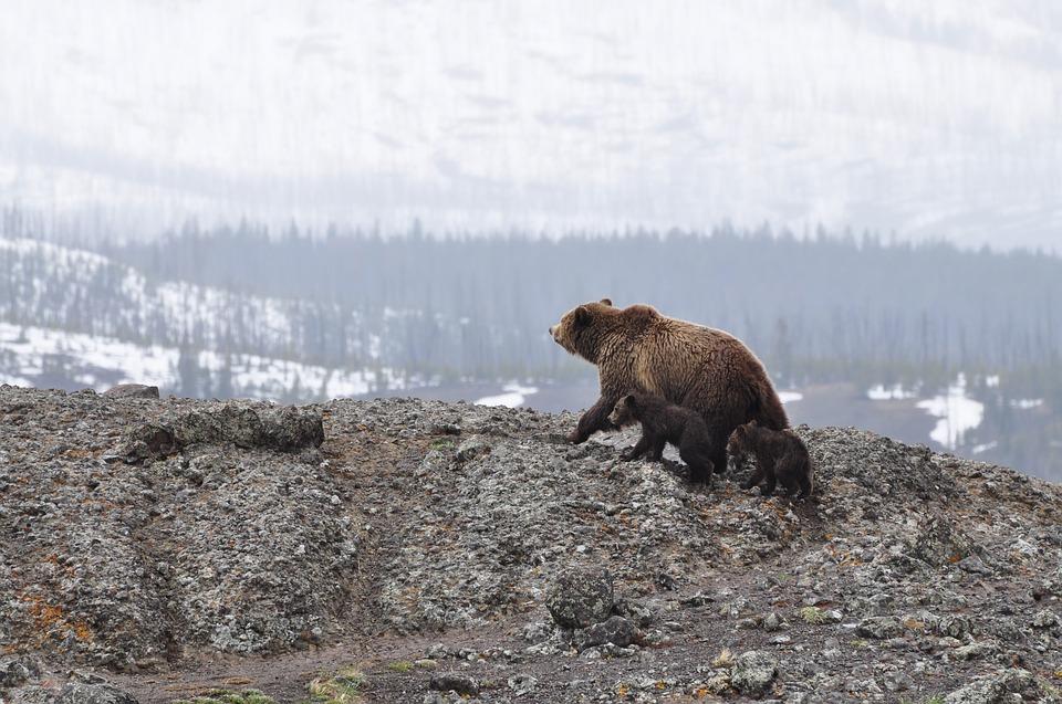 NEOČEKIVANI DOGAĐAJ!!Medved napao policajca pa dobio kaznu..