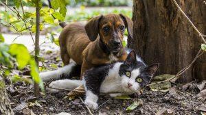 POGAĐAJTE! Ko je srećniji, vlasnici pasa ili vlasnici mačaka?