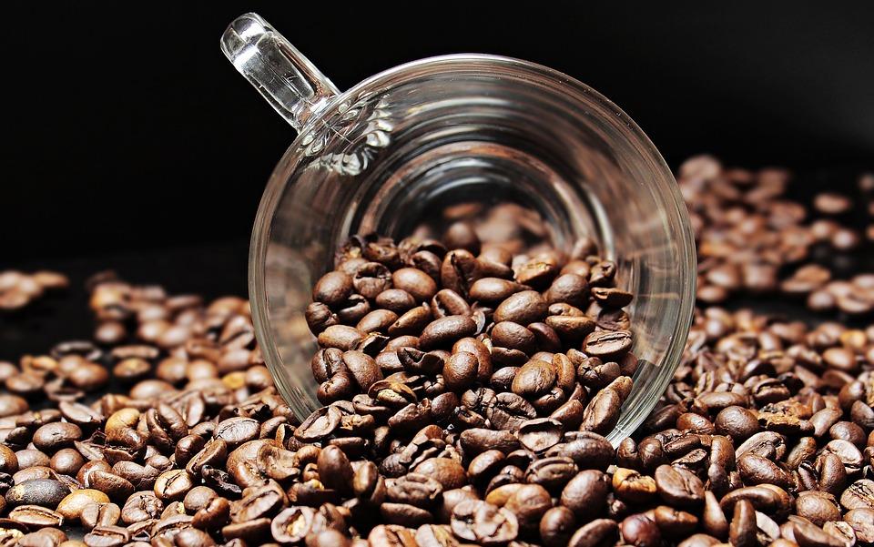 Kako uzgajati stablo kafe kod kuće?