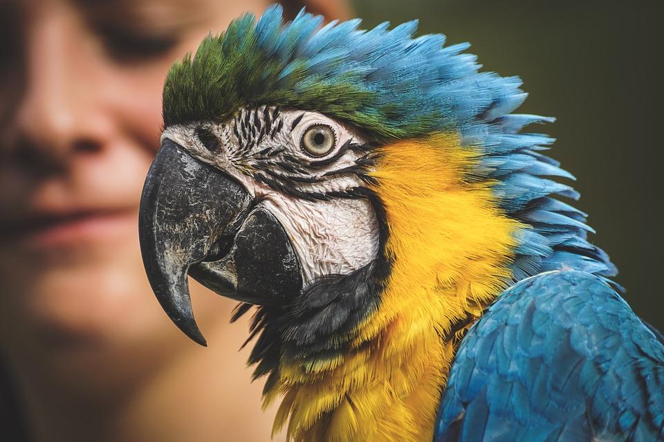 Papagaj se vratio kući u Veliku Britaniju posle 4 godine, ali sada PRIČA ŠPANSKI