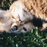 Italija: Za ostavljanje životinja na ulici kazna 10.000€ ili godinu dana zatvora