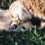 Mačke i psi