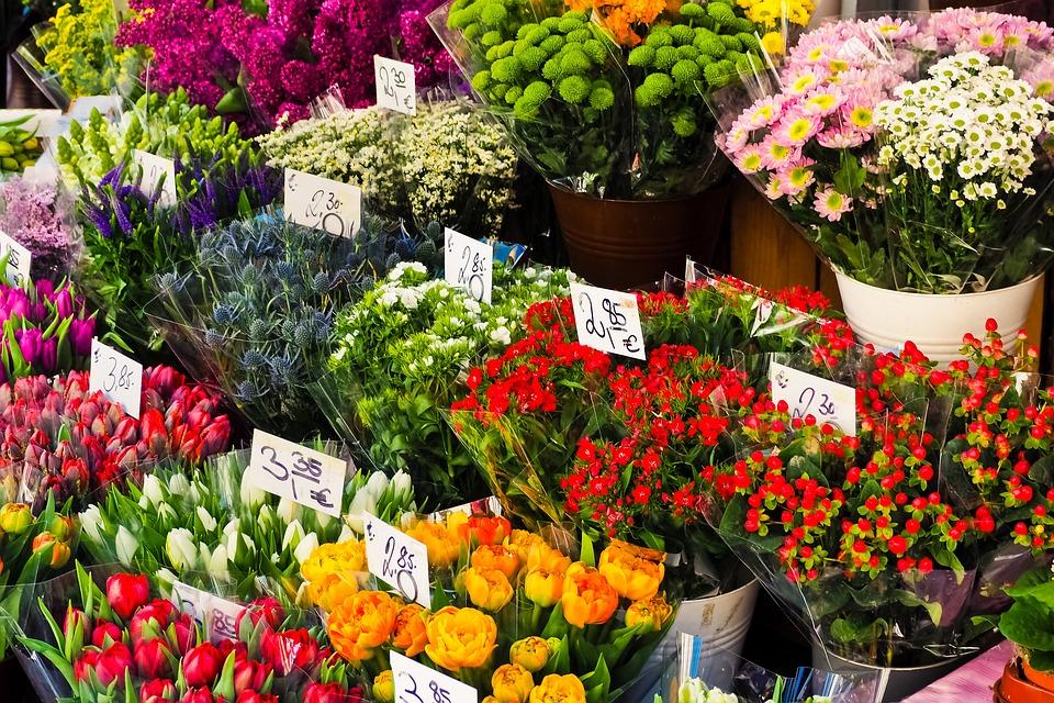 Cveće koje privlači leptire