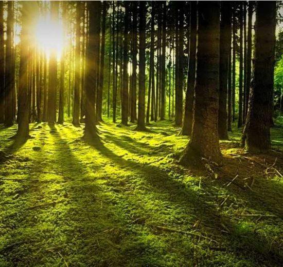 Da li je šuma novi tržni centar u vremenu posle korone?