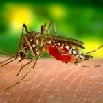 RECITE NE KRVOPIJAMA! Doktor Nestorović otkriva kako da se odbranimo od komaraca!