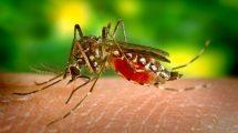 VIRUS ZAPADNOG NILA OTKRIVEN U 11 GRADOVA: Zaraženi komarci se šire Srbijom