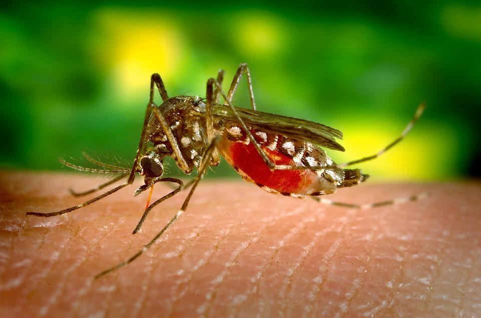 Evo u kojih osam gradova u Srbiji ima komaraca zaraženih virusom Zapadnog Nila!