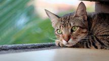 Evo zašto mačke vole da spavaju na glavi svojih vlasnika!