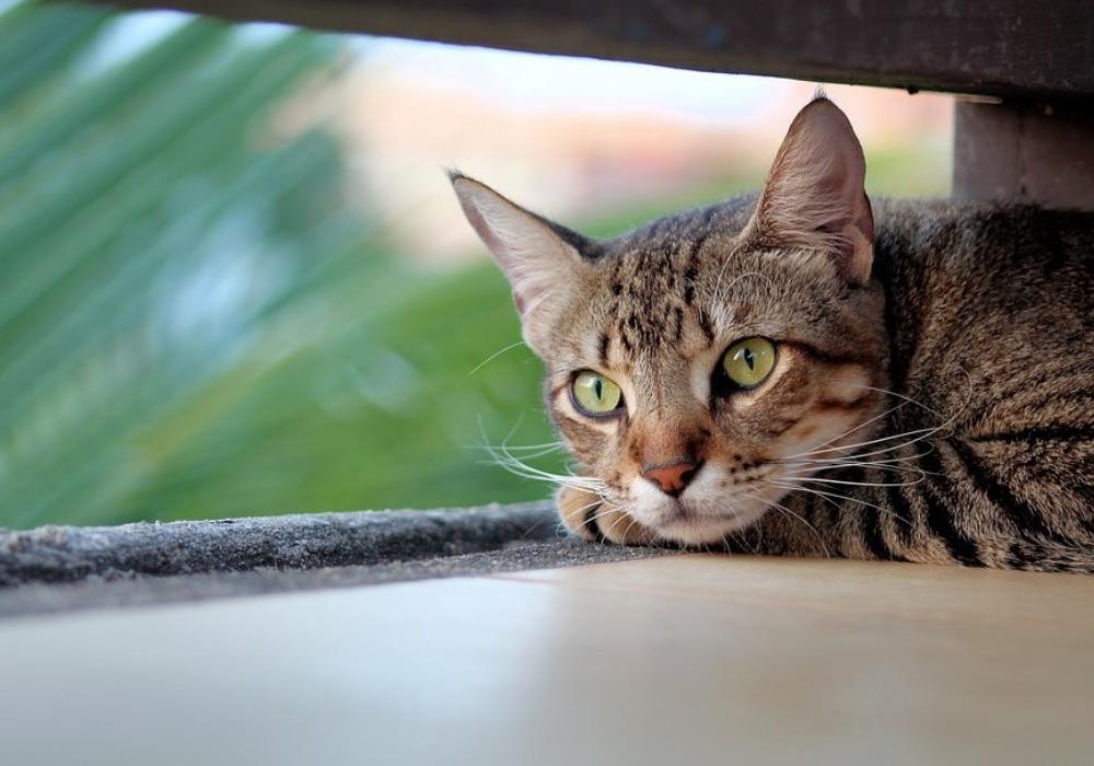 Kako mačke reaguju na zemljotres?