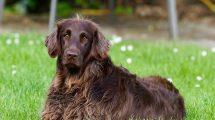 5 stvari koje ljudi često čine, a koje psima jako smetaju!