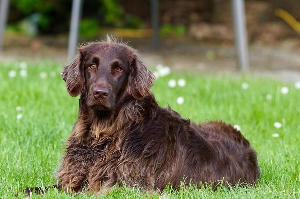 Koliko dugo pas može da ostane sam kod kuće?