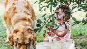 Koje voće vaš pas sme da jede?