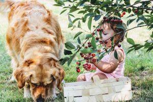 Kazne za Australijance koji ne šetaju svoje pse