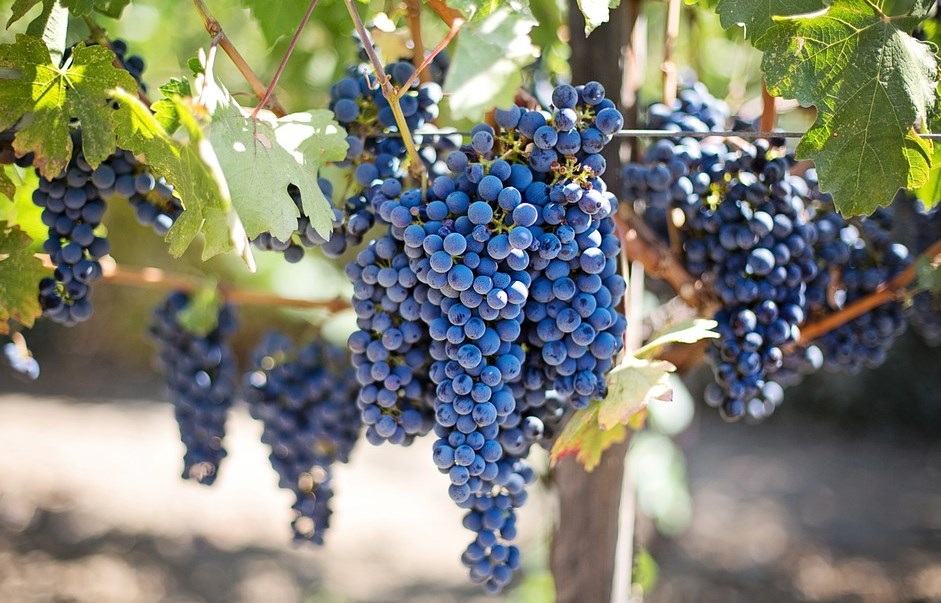 NAJBOLJI DETOKS - VAŠ ORGANIZAM ĆE SE PREPORODITI: Jedite ovo voće izbacuje TOKSINE i reguliše probavu!