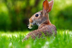 Ako vam je ZEC kućni ljubimac, evo šta ne treba da jede!