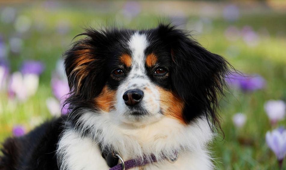 Pas vam je omiljena životinja? Evo šta to govori o vama