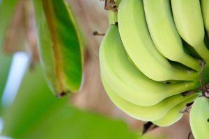 Banana najbolja za podmlađivanje kože