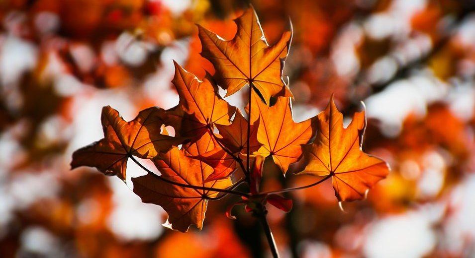 JOŠ SUNČANIH DANA: Vremenska prognoza za 14. oktobar
