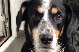 Milica je pas o kojem priča CEO BEOGRAD: Posle mnogo godina videla je dečka koji ju je spasao i uradila nešto što je SVE RAZNEŽILO