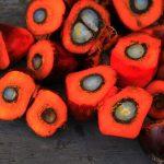 Palmino ulje – Evo zašto ne valja!