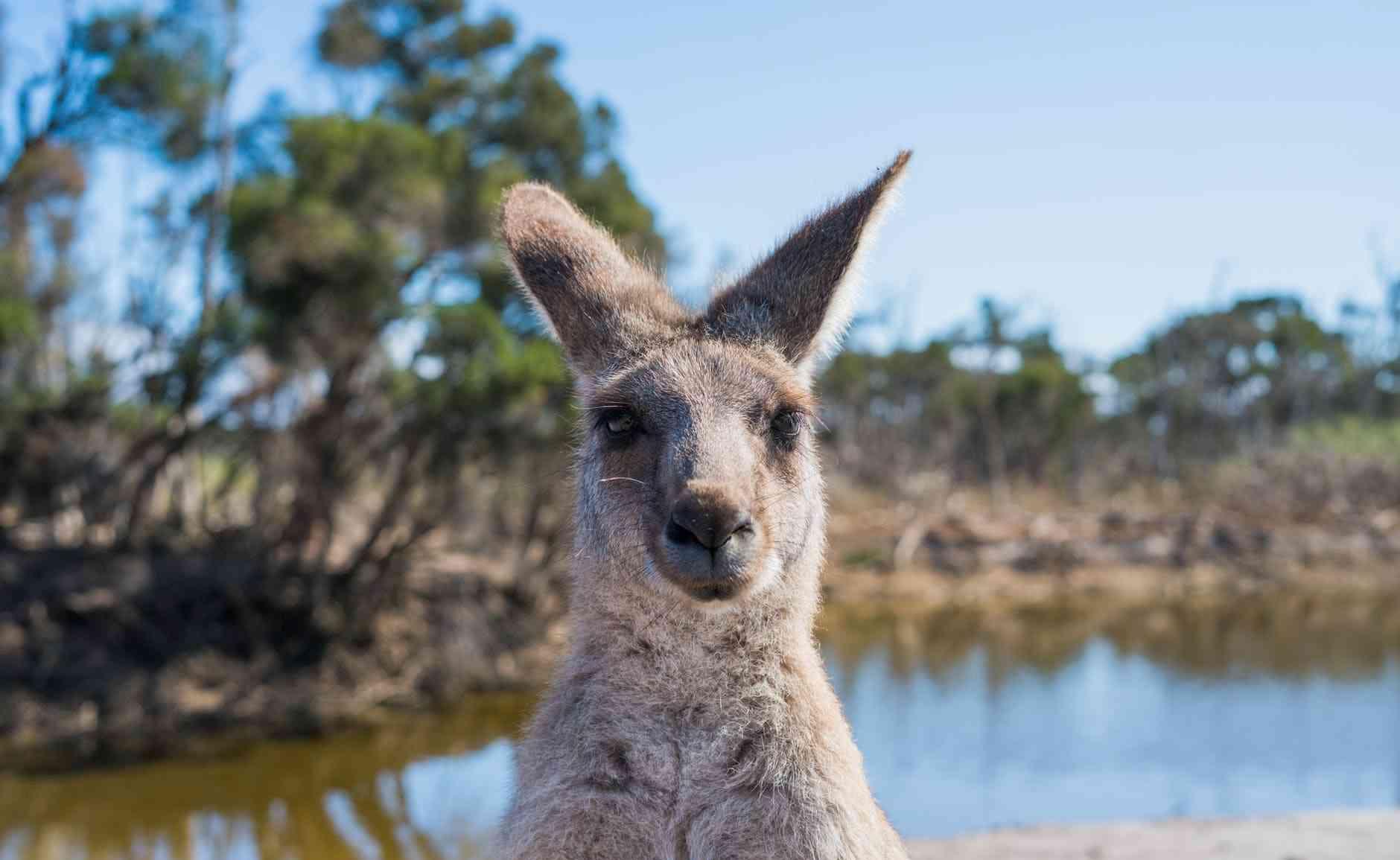 MODEL ZA OPSTANAK SVETA: Australija i Novi Zeland imaju plan za budućnost putovanja?