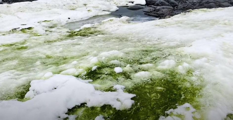 NEVEROVATNA POJAVA! Antarktik prekriven zelenim snegom (VIDEO)
