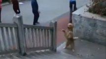 Pas stao na zadnje šape, a onda učinio nešto zbog čega su prolaznici OSTALI U NEVERICI! (VIDEO)