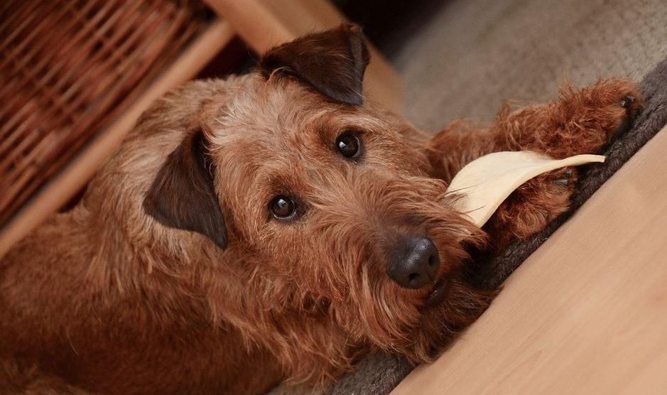 Gledanje u pse podstiče lučenje HORMONA SREĆE