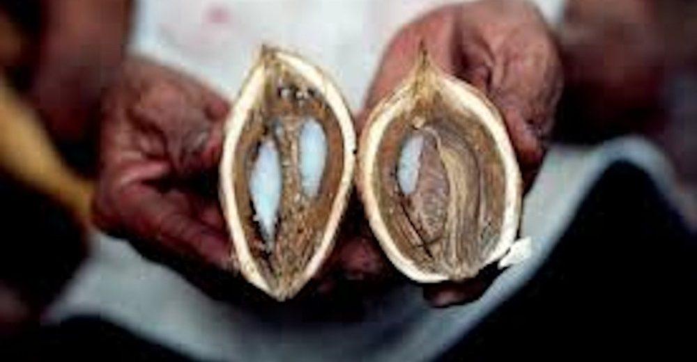 Za negu uvek izaberite najbolje! Ulje od Babasu palme PREPORODIĆE važu kožu i kosu!
