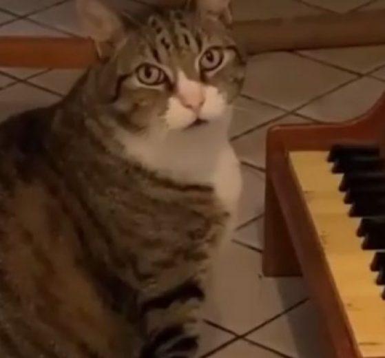 """NORA je HIT na Instagramu, jer odsvira """"Gladnu sonatu"""" kada TRAŽI hranu! (VIDEO)"""