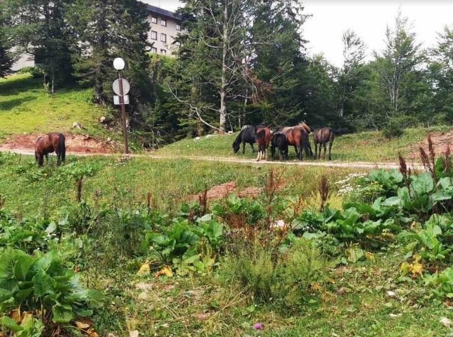 Olimpijska lepotica puna gostiju: Jahorina beleži najuspešniju letnju sezonu u istoriji, Gradski Magazin