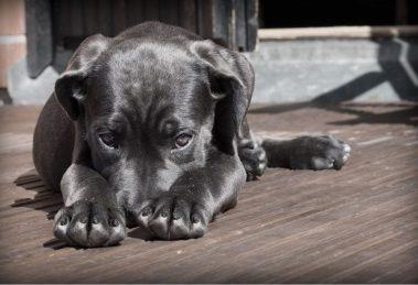 Vaš pas nije baš toliko pametan koliko ste mislili! Otkrijte zbog čega!