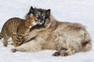 PSI imaju veći MOZAK od mačaka!