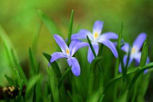 Mesec ROĐENJA otkriva koji cvet je pravi za vaš VRT!
